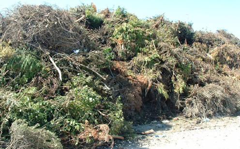 wywóz odpadów zielonych, liści, trawy, gałęzi, drzewek, krzewów, krzaków