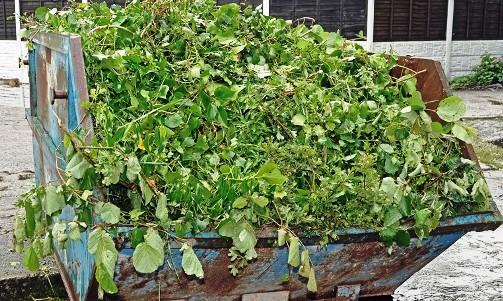 wywóz odpadów zielonych Łódź